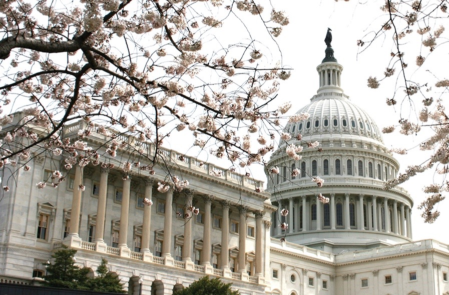 capitol-cherry-blossoms-web